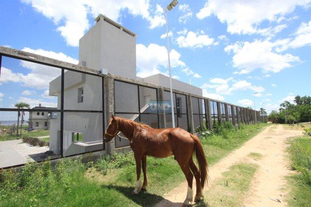 El caballo quedó del otro lado del paredón en el barrio Los Arenales. Foto <b>UNO</b> archivo.