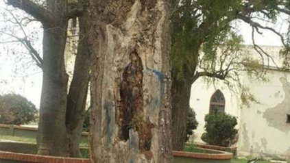 <div><div>Imagen de la virgen en el árbol.</div><div> </div></div>