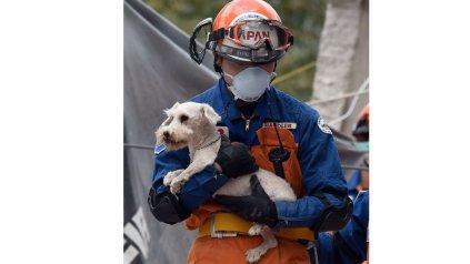 <div><div>Después de días de apoyo en las tareas de rescate, los japoneses se llevaron la sorpresa que entre las ruinas encontraron a un pequeño perrito.<div><br></div></div></div>